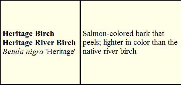River Birch Facts